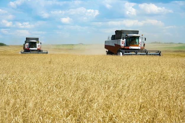 Due mietitrebbie in un campo con raccolti di grano
