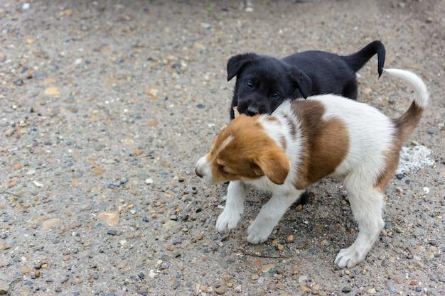 Due simpatici cuccioli senzatetto combattono, giocano e si mordono a vicenda. uno nero un altro bianco-marrone, chiazzato. divertenti giochi di cuccioli amichevoli.
