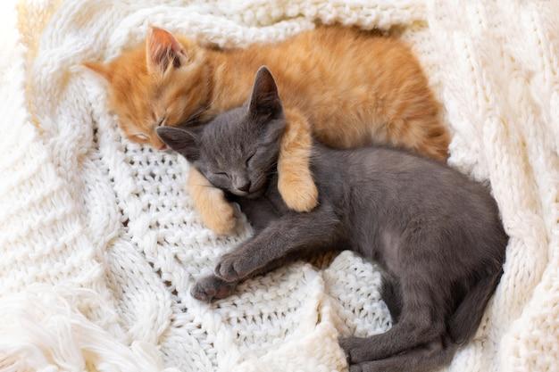 Due gattini svegli del tabby che dormono e che abbracciano sulla sciarpa lavorata a maglia bianca.