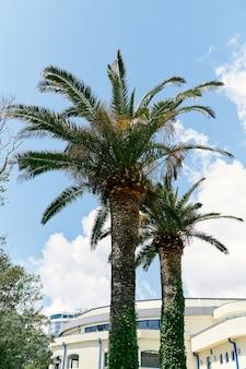 Due palme da dattero crescono vicino alla casa contro il cielo blu