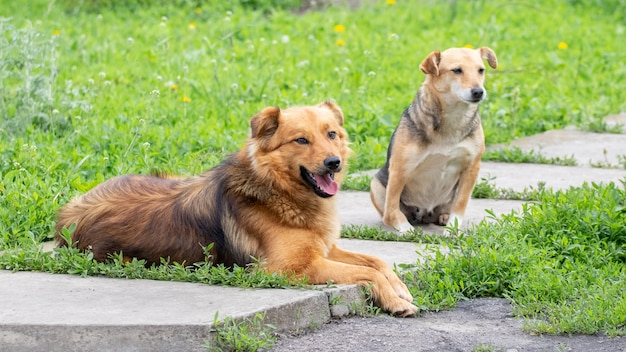 Due cani riposano in giardino