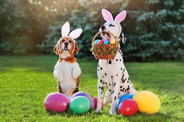 Due cani alla caccia alle uova di pasqua con cestini