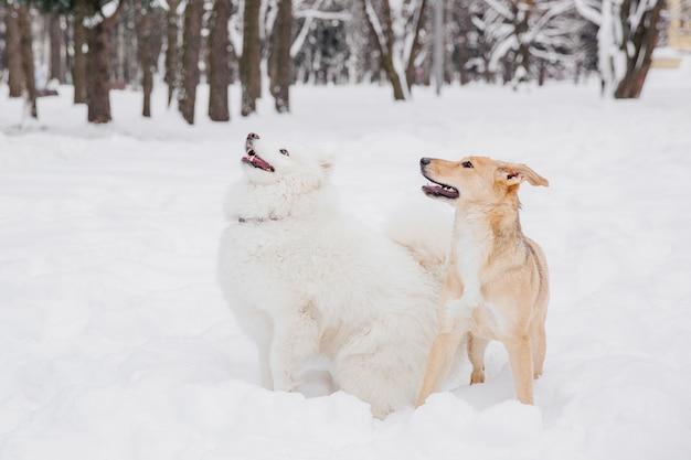 Due cani divertenti che si siedono sulla neve in una foresta