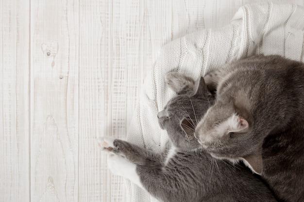 Due gatti grigi dormono insieme, abbracciano e curano. mostra tenerezza, sdraiati su un morbido maglione lavorato a maglia bianco.