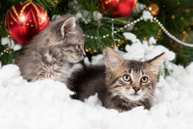 Due gattini grigi si nascondono nella neve vicino all'albero di natale.
