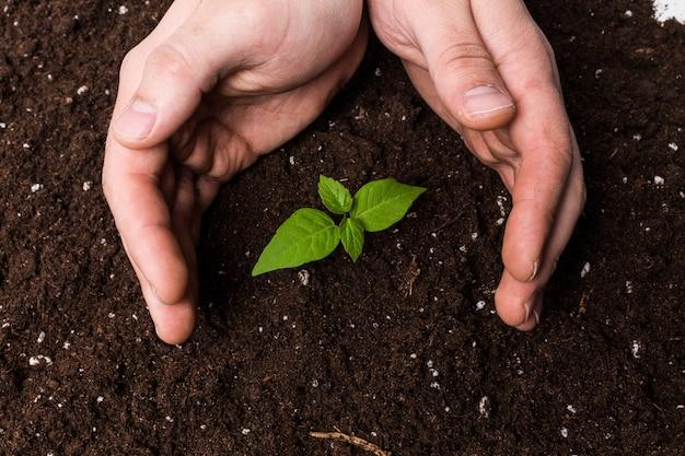 Due mani che tengono e si prendono cura di una giovane pianta verde