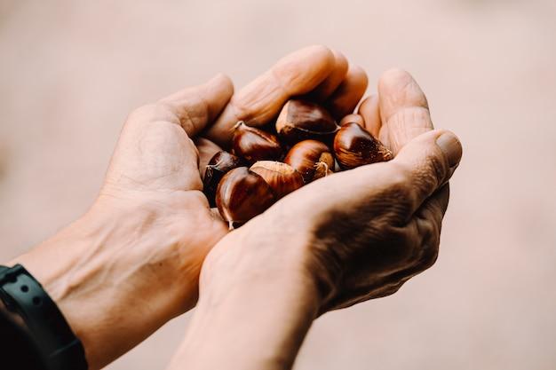 Due mani che tengono molte castagne