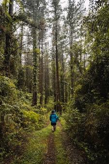 Due escursionisti in impermeabili che camminano attraverso una foresta sotto la pioggia
