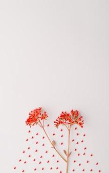 Due fiori rossi di kalanchoe in basso su uno sfondo bianco concetto autunnale primaverile piatto lay