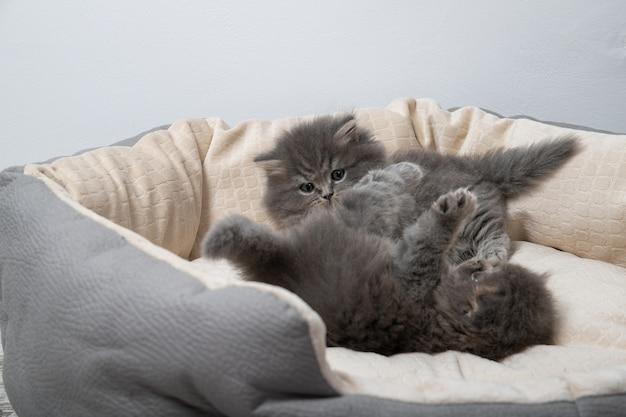 Due gattini sono sdraiati sul letto per gatti. i gattini stanno giocando