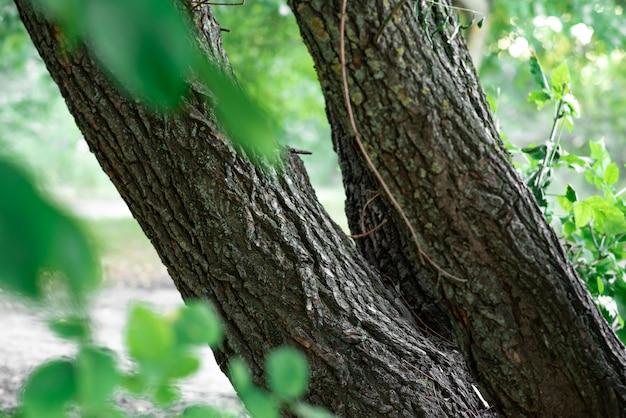 Due grandi alberi nel parco. concetto d'autunno