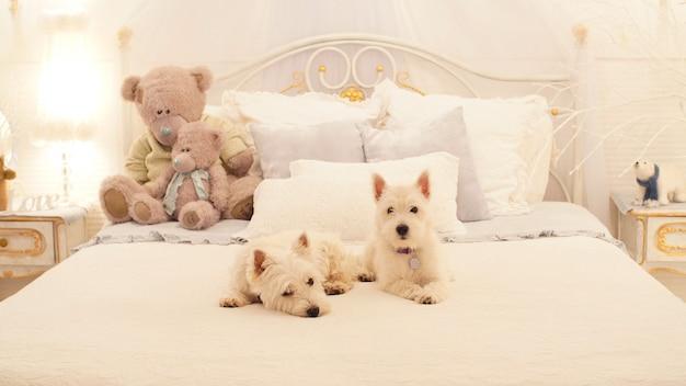 Due cuccioli siedono sul letto in camera da letto. due adorabili cani pronti a festeggiare il natale