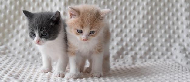 Due piccoli gattini stanno su uno sfondo chiaro.