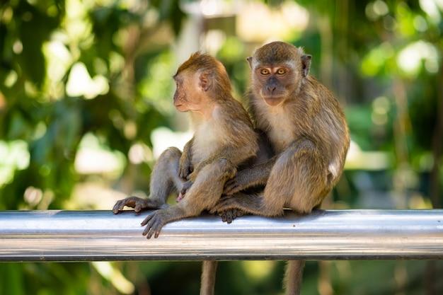 Abbraccio di due piccole scimmie mentre sedendosi su una rete fissa