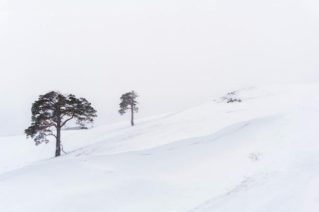 Due pini solitari su un pendio innevato contro un cielo bianco