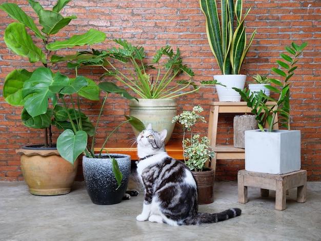 Due adorabili gatti felici che giocano nel muro di mattoni interni del soggiorno con aria purificano piante d'appartamento, monstera, philodendron, ficus lyrata, pianta di serpente e gemma di zanzibar in vaso