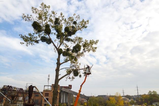 Due addetti ai servizi maschi che tagliano grandi rami di alberi con una motosega dalla piattaforma della seggiovia.