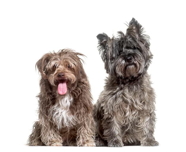 Due cani di razza mista seduti, ritagliati