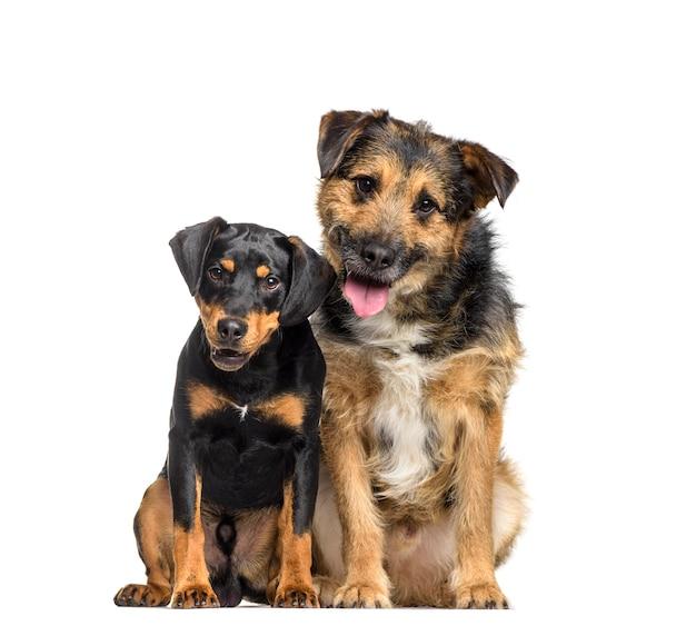 Due cani di razza mista seduti e ansimanti