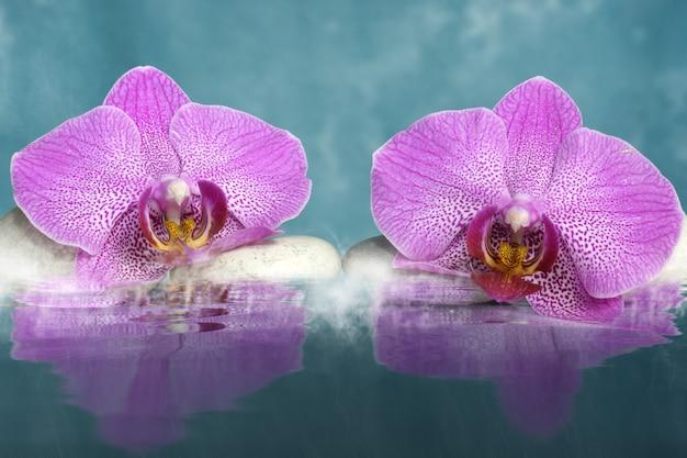 Due fiori di orchidea giacciono sulle rocce vicino all'acqua con nebbia