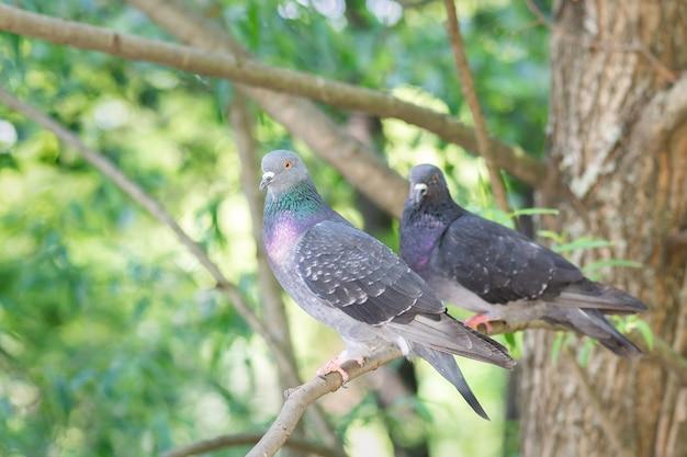 Due piccioni sono seduti su un ramo di un albero