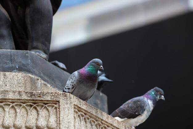 Due piccioni piuttosto colorati, appollaiati sulla sporgenza di pietra di una statua.