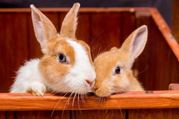 Due graziosi conigli morbidi, mamma e bambino, guardano fuori dalla gabbia_