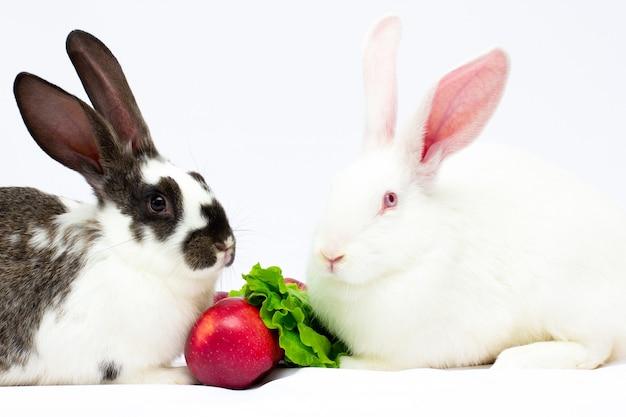 Due conigli mangiano mele a foglia vegetale su uno sfondo bianco