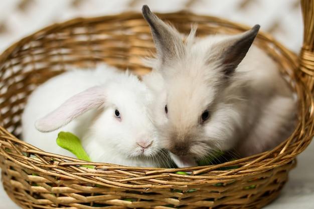 Due conigli grigi e bianchi sono seduti in un cesto di vimini. regalo di pasqua per i bambini. foto di alta qualità