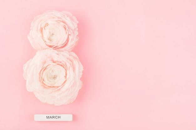Due fiori di ranuncolo con il numero otto su sfondo rosa