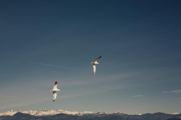 Due gabbiani che volano nel cielo