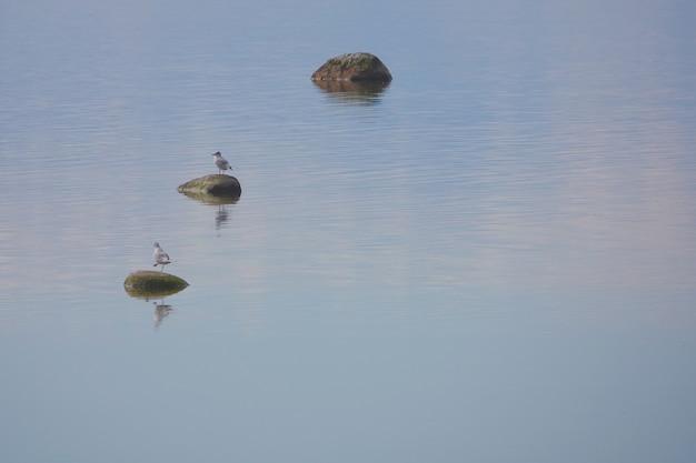 Due gabbiani al mare. tre pietre all'acqua di mare. armonia simmetrica e concetto di relax