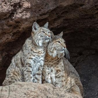 Due gatti molto attenti su una sporgenza