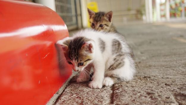 Due gattini molto carini nell'atrio della stazione dei treni