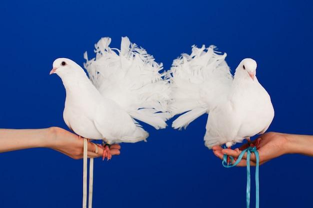 Due colombe bianche in mano, simbolo di pace e amore