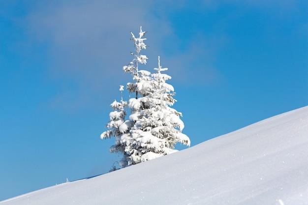Due soli abeti innevati invernali sul fianco di una montagna sullo sfondo del cielo blu
