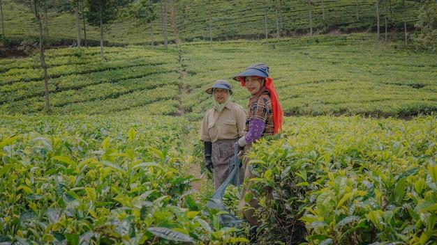 Due coltivatrici di tè non vedono l'ora con un sorriso allegro