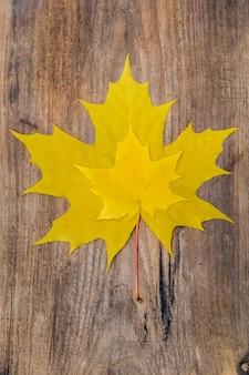 Due foglie di acero gialle che si trovano su una vecchia tavola di legno ruvida