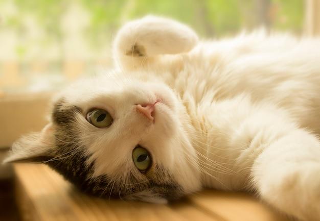 Il gatto bicolore si trova vicino al primo piano della finestra