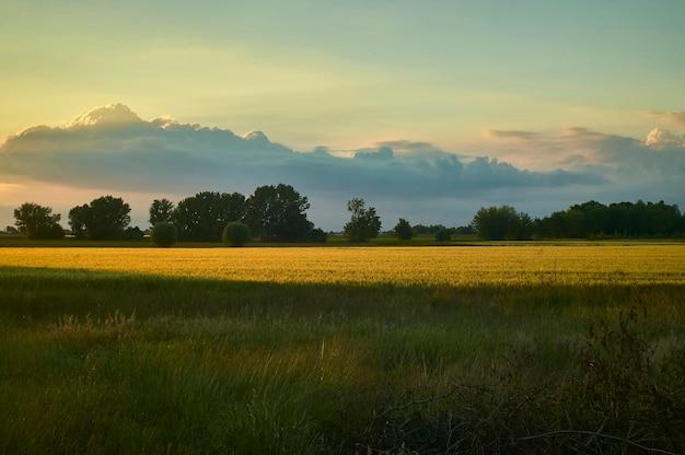 Tipico paesaggio di campagna del territorio veneto in italia, ripreso al tramonto con un temporale in avvicinamento, che crea contrasti tra colori caldi e freddi unici. una meraviglia della natura.