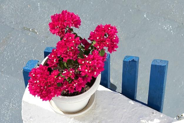 Immagine tipica delle isole cicladi, bouganville rosse su fondo bianco e blu