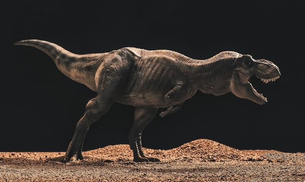 Tyrannosaurus rex isolato superficie nera