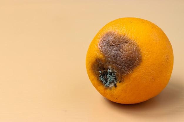 Arancione brutto con muffa su sfondo chiaro, primo piano, orientamento orizzontale, concetto di cibo brutto, spazio di copia