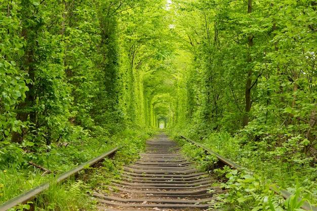 Ucraina. primavera. ferrovia nella fitta foresta di latifoglie.