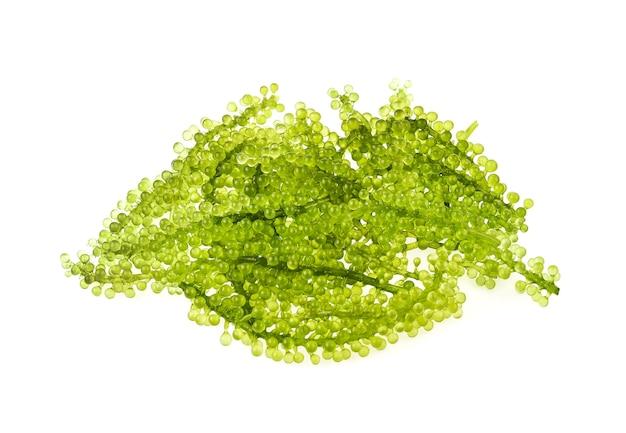 Umi-budou, alghe dell'uva o caviale verde isolato su bianco