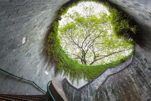 Tunnel sotterraneo dell'incrocio con la scala ed il grande fondo dell'albero.