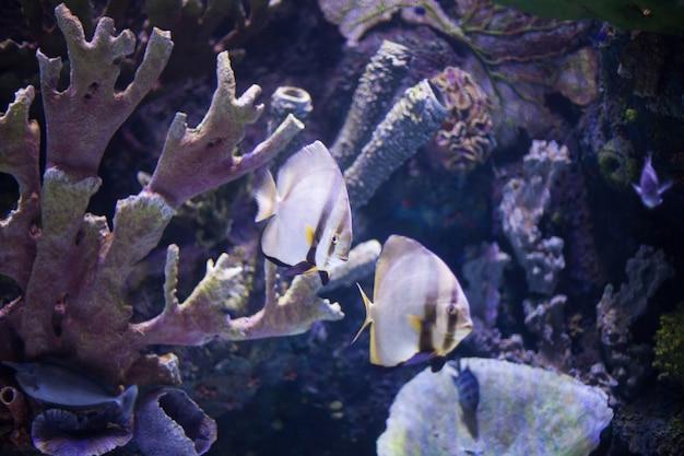 Barriera corallina del mondo sottomarino con pesci esotici
