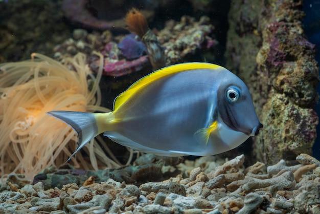 Bellezza sottomarina di pesci e barriere coralline
