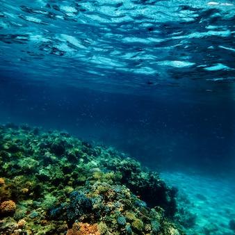 Barriera corallina subacquea sul mar rosso