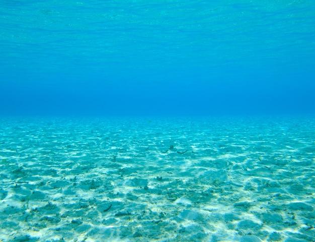 Scena subacquea con copia spazio